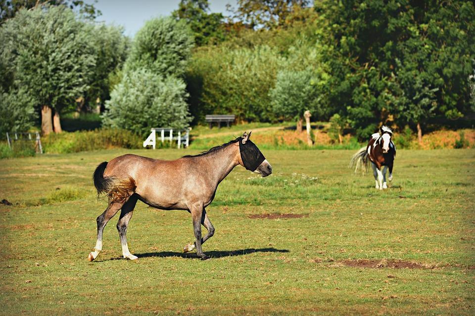 Horses on a farm.