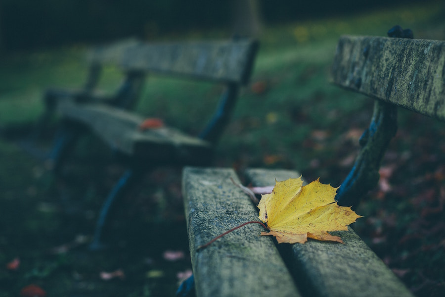 Two benches with leaves